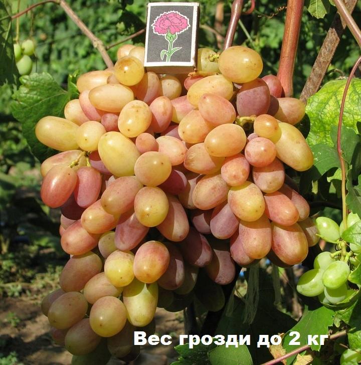Коробок спичек размером с виноградину