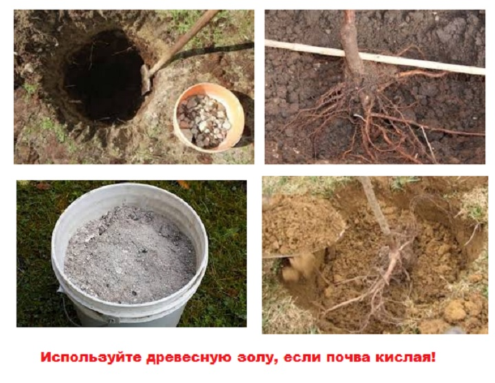Подготовка почвы для посадки груши