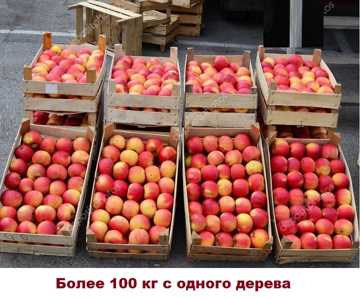 Урожайность Мальта
