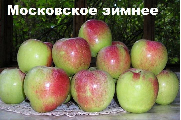 Плоды яблони Московское зимнее