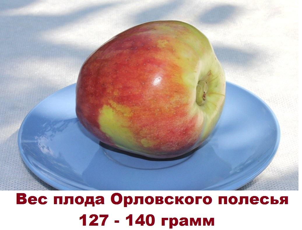 Вес плода Орловского полесья