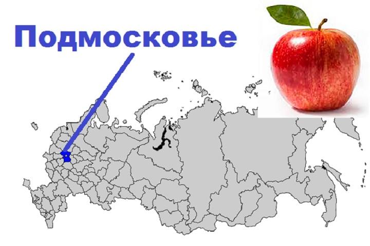 Лучшие сорта яблонь для Подмосковья- советы по выбору сорта