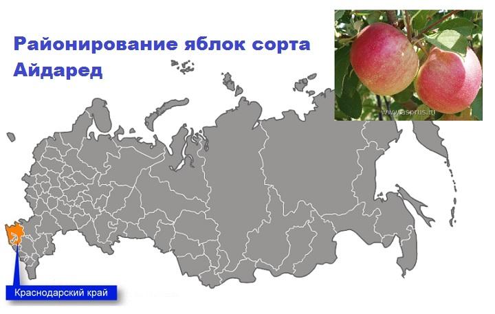 Районирование Айдаред в РФ