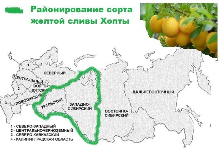 Карта желтой хопты
