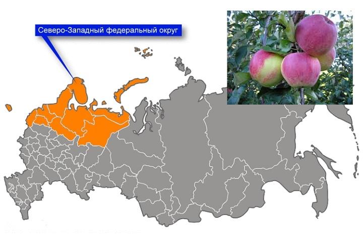 Районирование яблони Аэлита