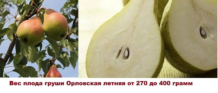 Груша Орловская в разрезе