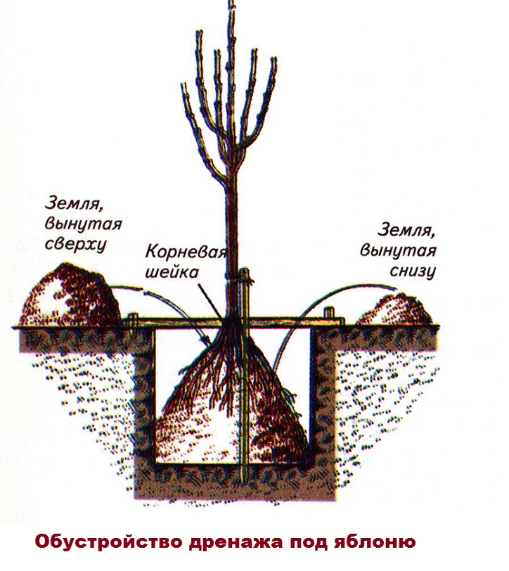 Схема обустройства дренажа