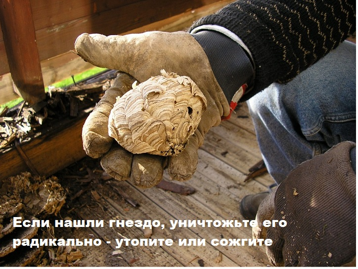 Осиное гнездо в руках человека