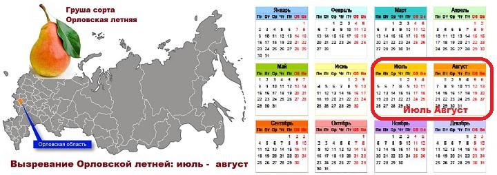 Календарь сбора груш