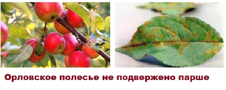 Орловское полесье не запаршивет
