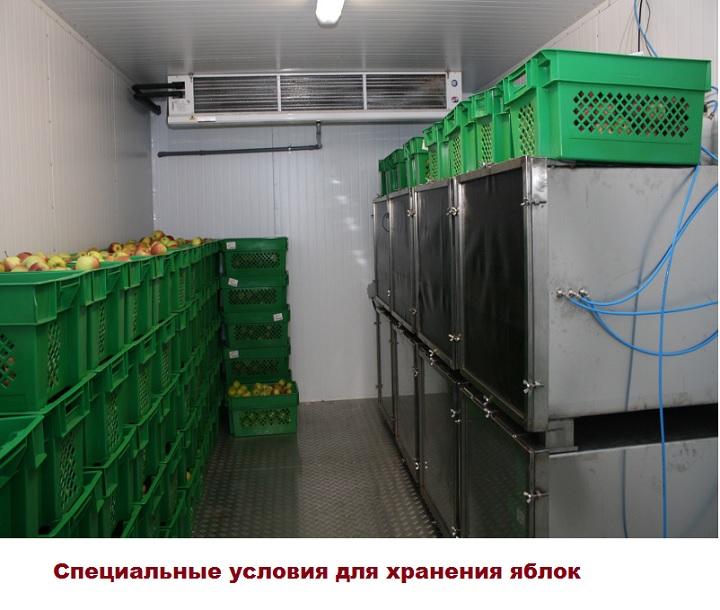 Специальные камеры для хранения плодов