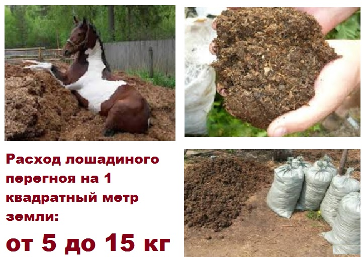 Использование лошадиного перегноя