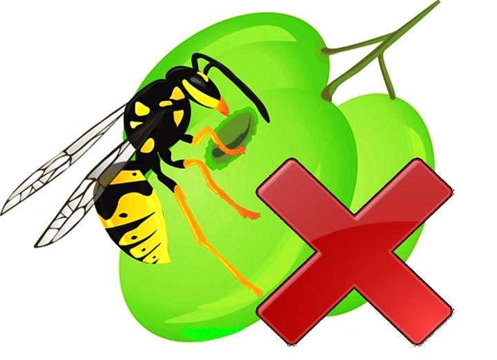 Виноград не трогают осы