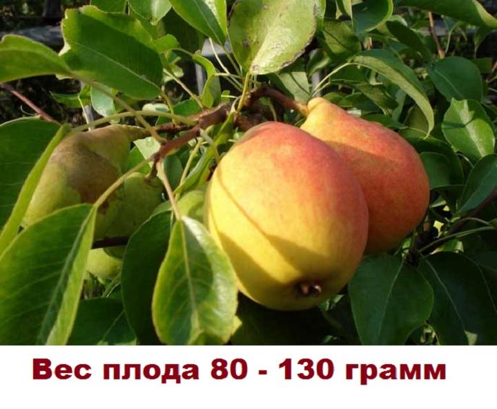 Вес плода Отрадненской