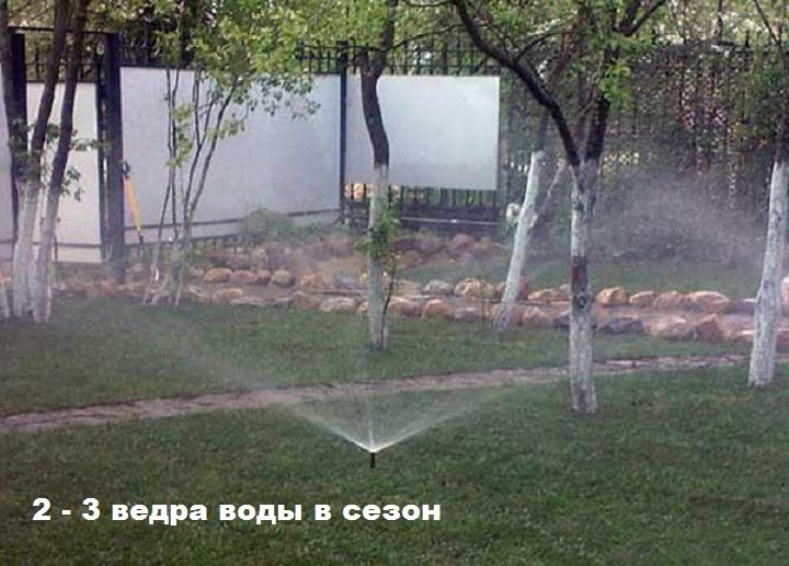 Объем воды для полива яблони