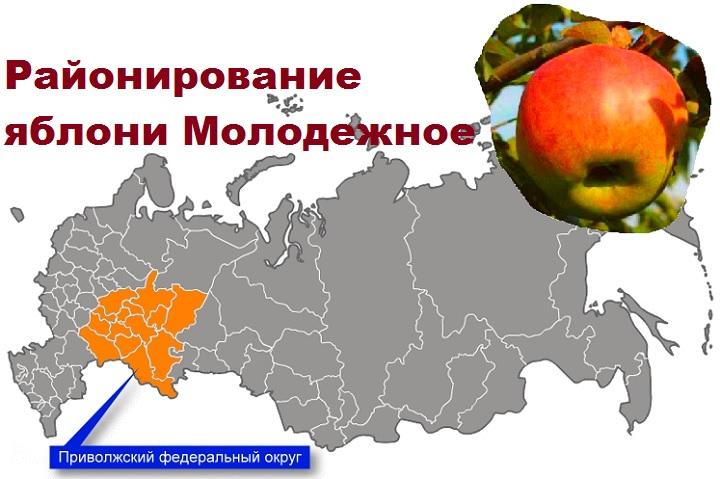 Районирование Молодежного яблока в РФ