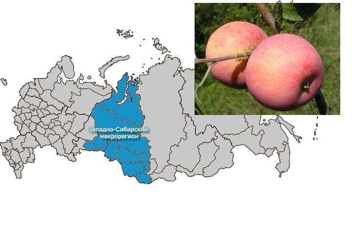 Места районирования яблонь Алтынай
