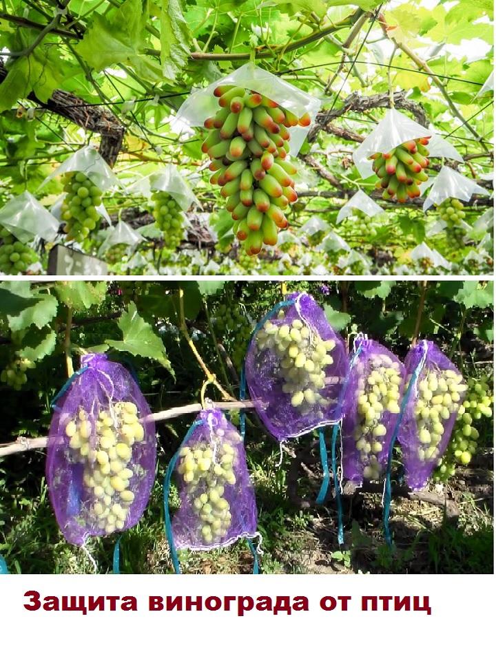 Защита винограда сетками