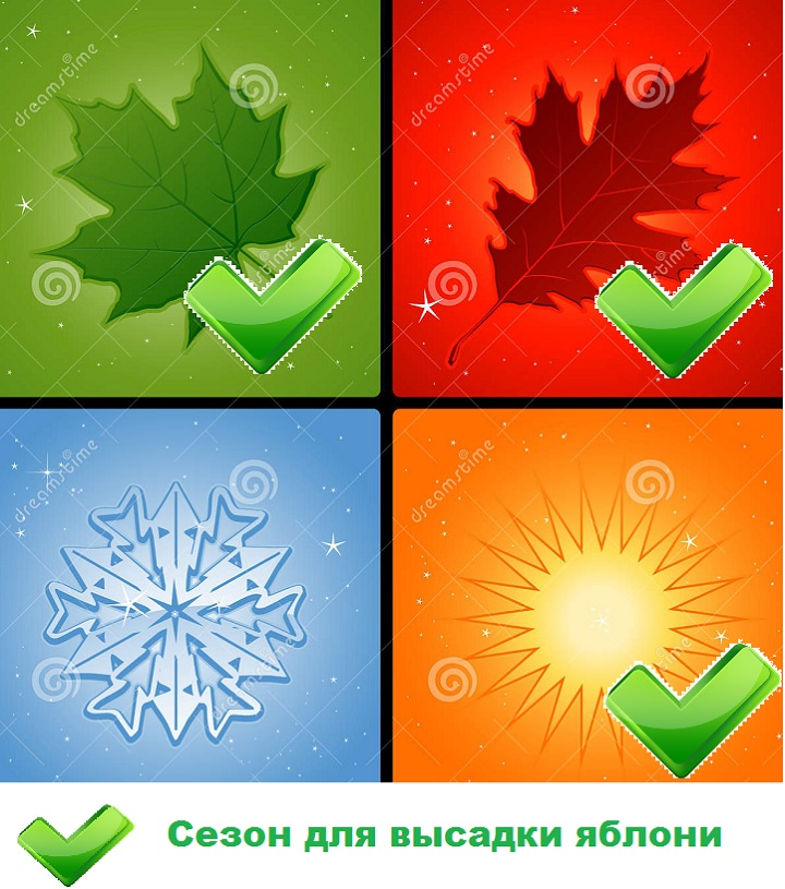 Наглядное изображение сезонов для посадки яблонь