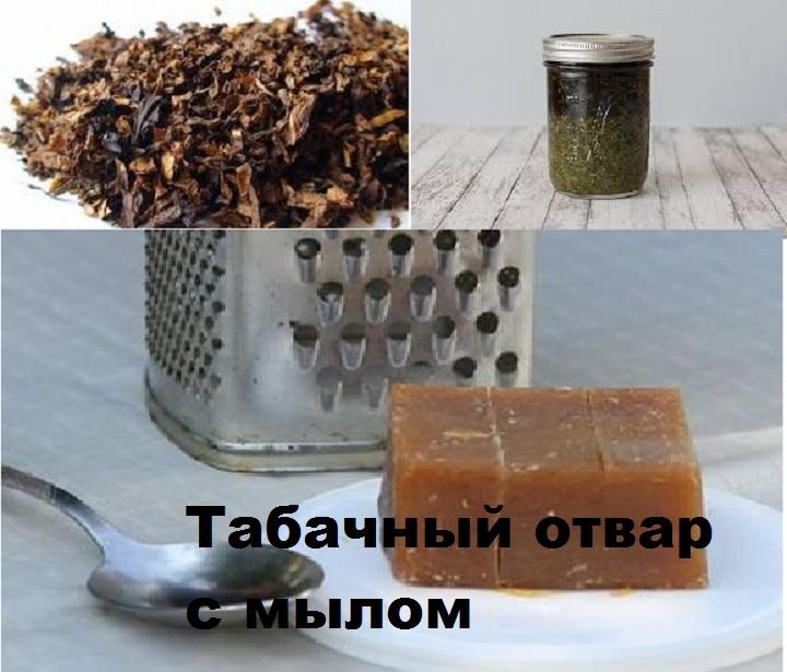 Отвар из табака и мыла от вредителей