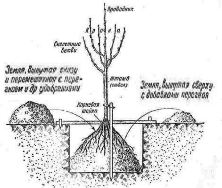 Посадка дерева. Терминология