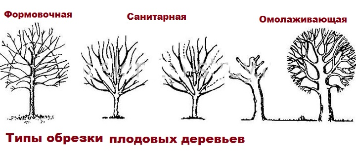 Три типа обрезки деревьев