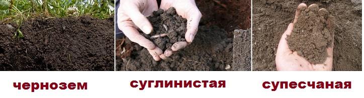 Типы подходящих Кардиналу почв