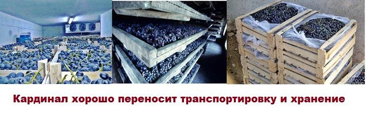 Хранение и транспортировка винограда