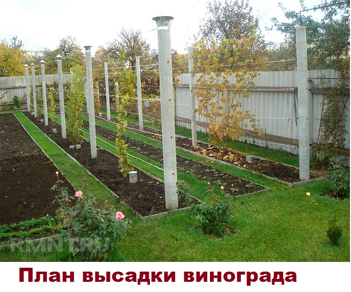 Солнечное место под виноград