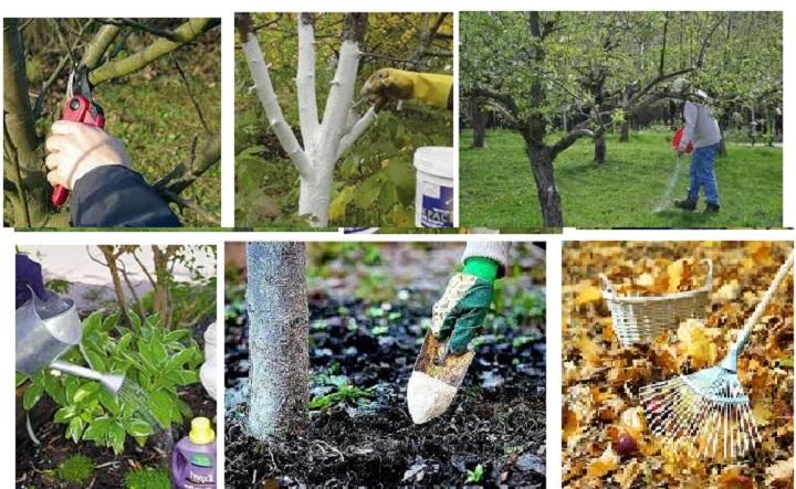 Виды работ по уходу за яблоней