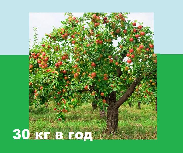 Годовой урожай Аэлиты