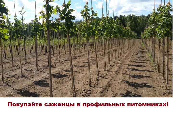 Питомник по выращиванию саженцев