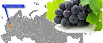 Виноград в московской области на карте РФ