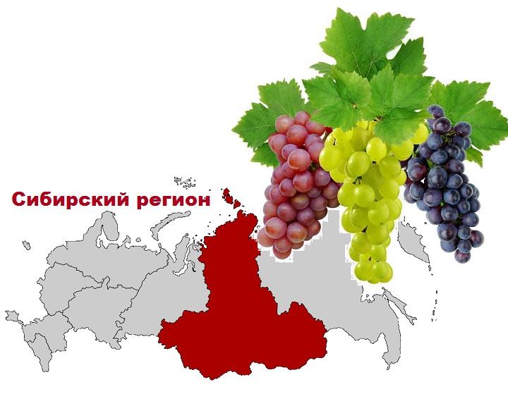 Сибирский регион на карте РФ