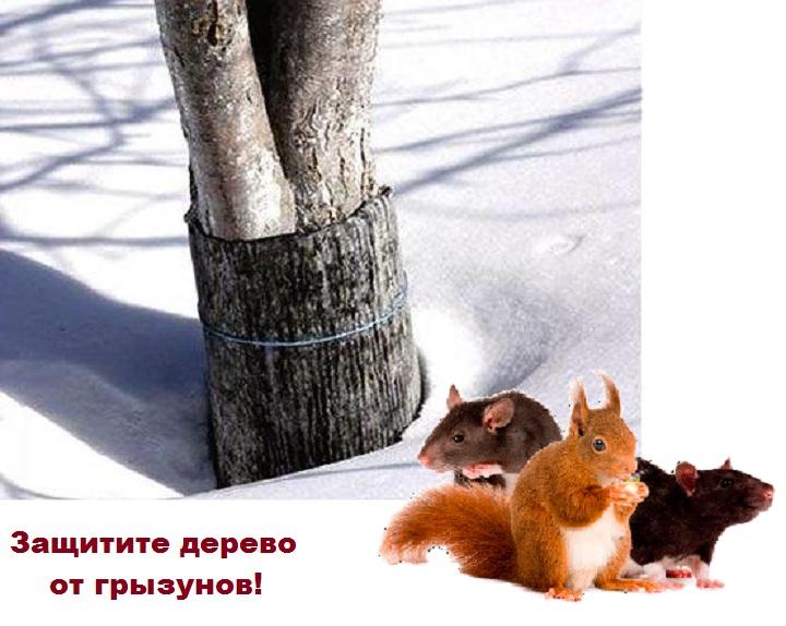 Обернутое дерево