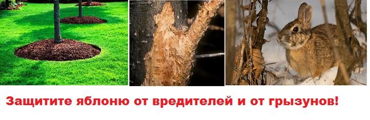 Мульча и защита от грызунов