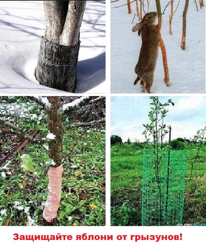Использование сеток от грызунов