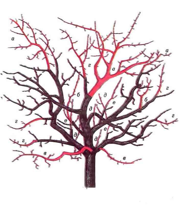 Красные ветви должны быть обрезаны