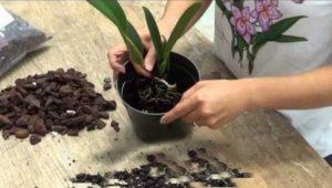 Старая почва в новый горшок