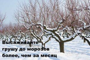 Зимний сад и рекомендация по посадке