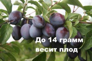 Вес плода Синий дар