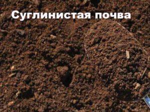 Внешний вид суглинистой почвы