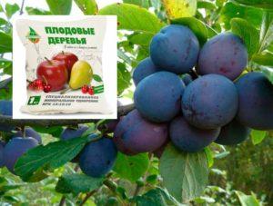 Специальное удобрение для плодовых деревьев