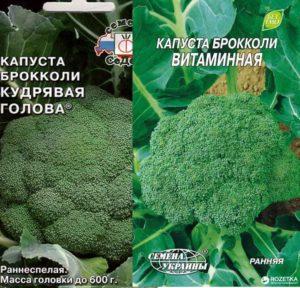 Сорта брокколи: кудрявая голова и витаминная