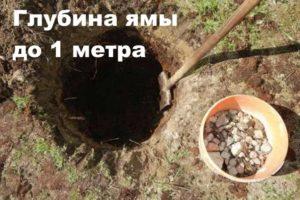 Подготовка ямы под груши