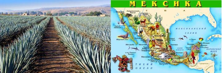Мексика и плантация агавы