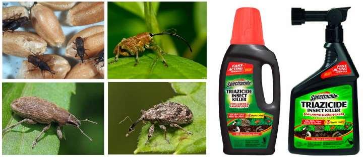 Внешний вид жуков долгоносиков