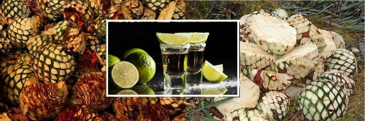 Плоды агавы и текила в стаканах