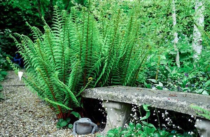 Садовый ланшафт с папоротником