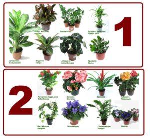 Растения лиственные и цветущие